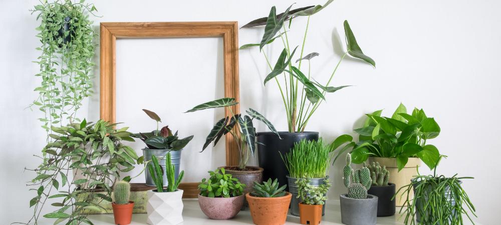 La folie des plantes vertes, tout savoir sur la tendance « plantporn »