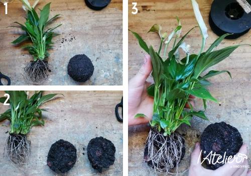 Etape 3 - Fabriquer son kokédama soi-même, explications  - Plante enrobée dans de la mousse qui forme une sphère parfaite