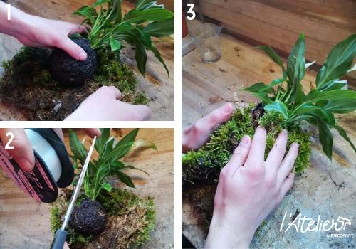 Etape 4 - Fabriquer son kokédama soi-même, explications  - Plante enrobée dans de la mousse qui forme une sphère parfaite