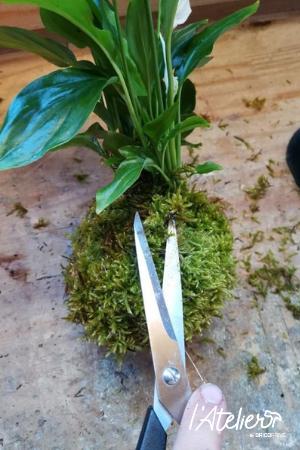 Etape 5 - Fabriquer son kokédama soi-même, explications  - Plante enrobée dans de la mousse qui forme une sphère parfaite