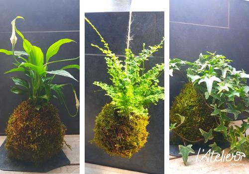 Fabriquer son kokédama soi-même, explications  - Plante enrobée dans de la mousse qui forme une sphère parfaite