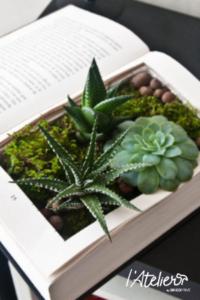 8 idées d'upcycling pour mettre en avant des succulentes