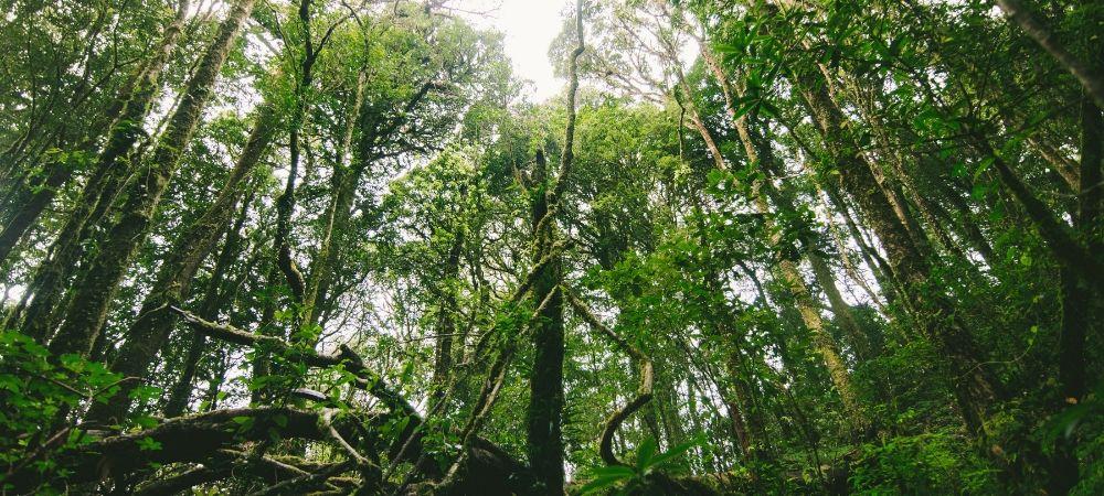 11 gestes simples pour réduire son empreinte écologique - Brico Privé