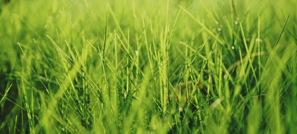 Comment entretenir sa pelouse ? - Brico Privé