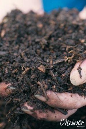 Agir facilement pour l'environnement avec le compost - Brico Privé