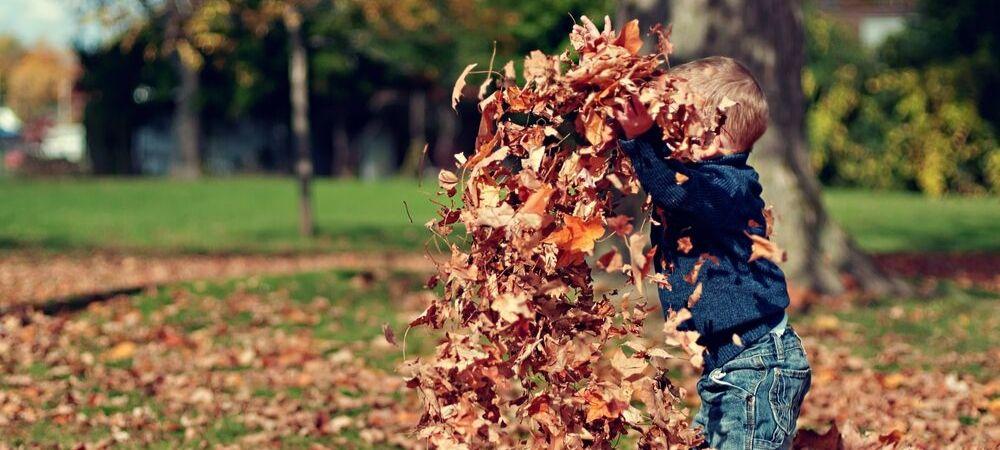 4 gestes pour entretenir son jardin en automne - Brico Privé