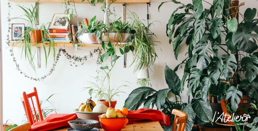 Bien entretenir ses plantes en hiver - Brico Privé
